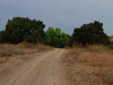 Alamos Image4