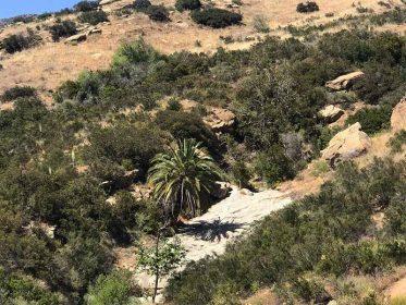 Hummingbird Trail Image4