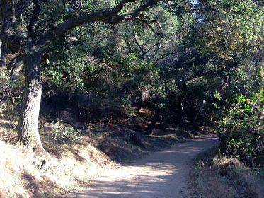 Long Canyon Trail Image1