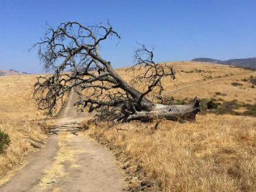 Las Llajas Trail Image4