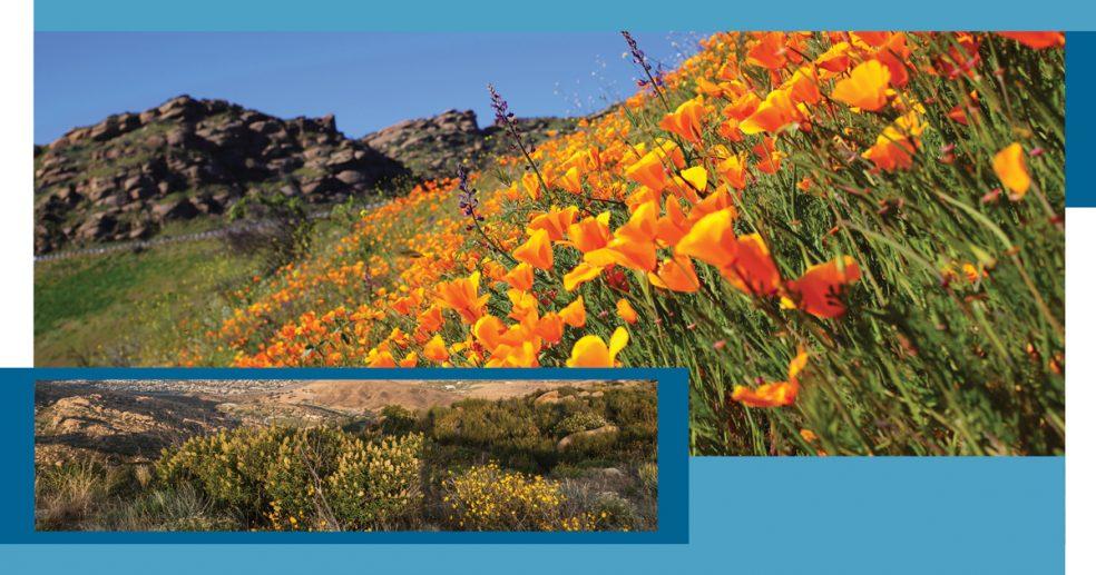 Simi Wildflower Hikes Bloggraphics 2